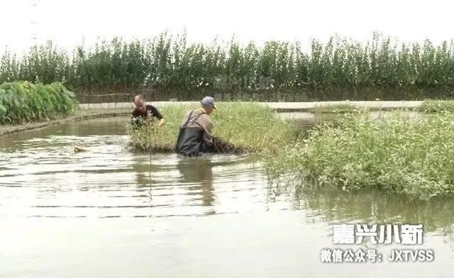 嘉兴一老汉养水产玩混搭15年 一年收入40万元