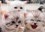 看了自家猫咪和闺蜜们的合照