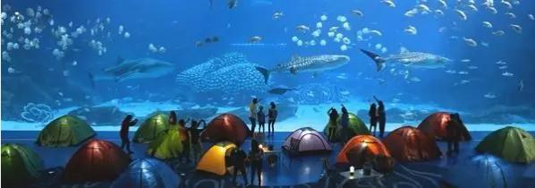 把床搬进海洋馆 和各种鱼儿一起共眠