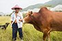 老农养牛60余年成专家 外地人买牛聘其为参谋