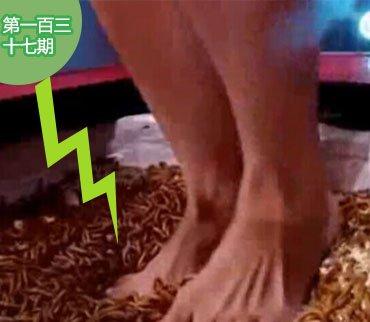 2015-04-11期:被迫踩在蛆虫堆里 盘点大明星被节目整�K�蹇�