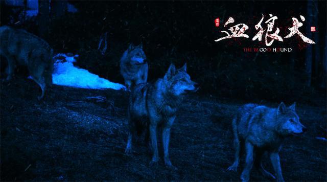 《血狼犬》一部闪现人与动物之间真性情感的巨作