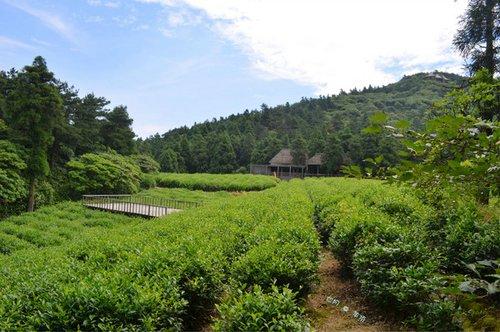 天台山华顶国家森林公园 休闲避暑好去处图片
