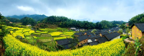 """油菜花开出乡村富美 这个村庄还要让""""花""""百日红"""