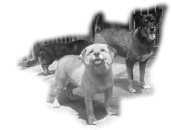 杭州一男子收留43只流浪狗 如今却面临困境