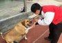 """因长得太可爱流浪狗被学生喂成了一头""""牛"""""""