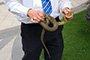 """>""""温州一公园爬出两条蛇"""