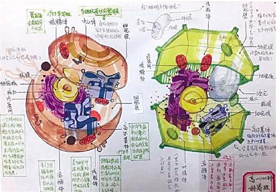 高中生手绘动植物细胞 简直以假乱真