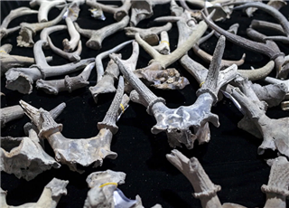 宁波发现距今8000多年遗址