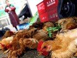 财智汇:禽流感引发A股狂欢