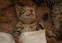 网友家的四只小奶猫睡在一起