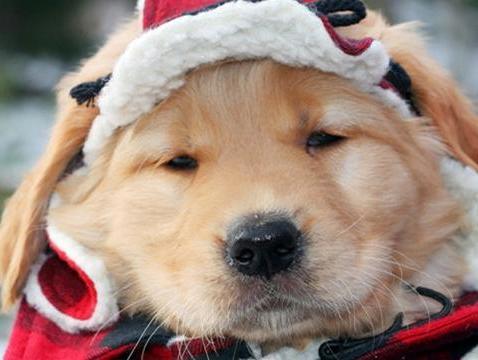 狗狗出现这些症状 说明你的保暖措施还不到位