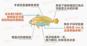【新闻课86】黄鱼打针,身价平步青云