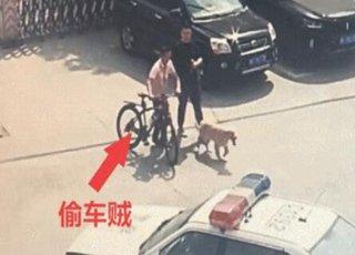金毛客串警犬抓了个贼