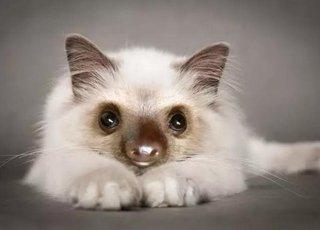 """这才是真正的""""小懒猫""""太可爱了"""