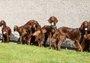 狗宝宝们出生后被送养