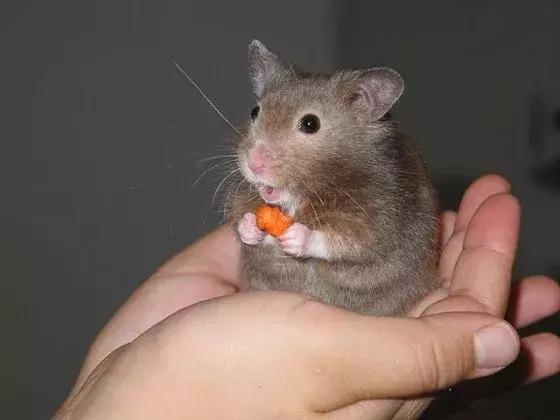 想捏爆可爱小动物的冲动正常吗?
