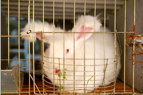 嘉兴六旬大伯卖母猪买兔子 智能养兔年收入这个数