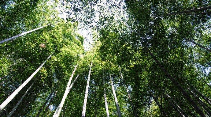 浙些森林氧吧 藏着≤25℃的夏天