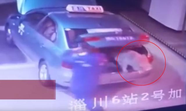 """这只狗逆天了!偷偷""""搭出租车""""上百里离家出走"""