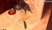 猫与黄瓜的奇妙邂逅