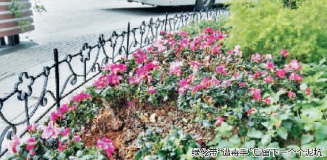 """绍兴城市广场上""""采花大盗""""频出没 被监控曝光"""