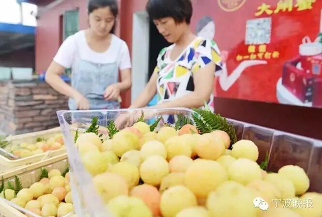 宁波最贵杨梅200元一斤 网友直呼买不起