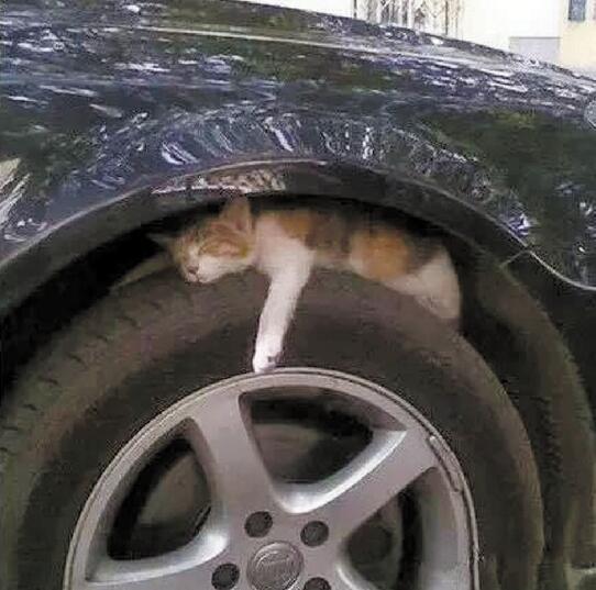 冬季小动物喜欢倚车蹭暖 开车前请按下喇叭