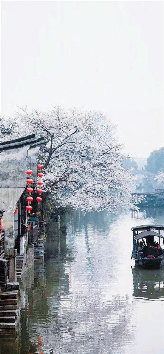 水乡芳菲诗润心田 打开嘉兴春之美的五种方式
