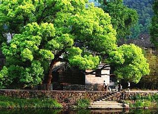 浙东6个少有人识的古村 美如仙境