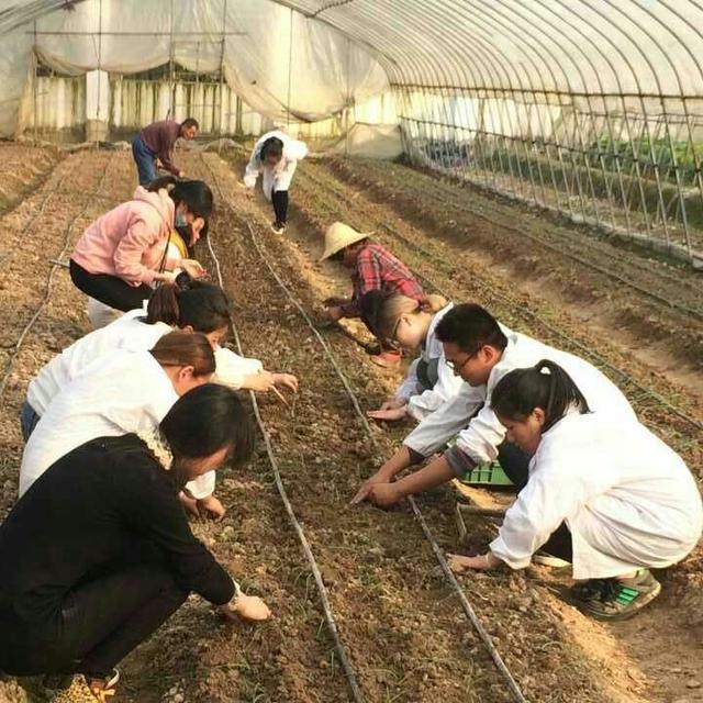 现代农业谋发展 美丽乡村共建设