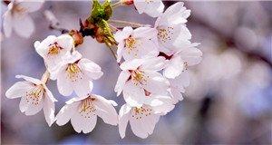 【新闻课171】萌妹赏花被迷晕