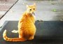 一只橘猫被加入图书馆黑名单 众网友为它抗议