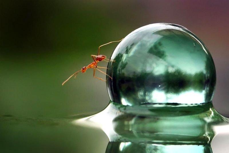 鳞屑早期囹�a_蚂蚁锲而不舍推弹珠 上演现实版\