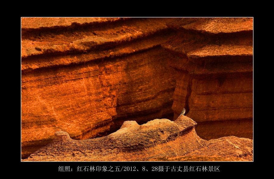 红石林印象(组5)-郑国强