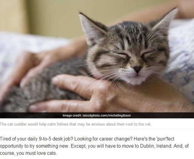 人与动物交配撸撸网_爱尔兰动物医院请人撸猫 全职抱猫官一年赚近20万元