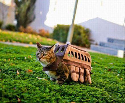 猫巴士入住三次元!技术宅带你开挂带你飞