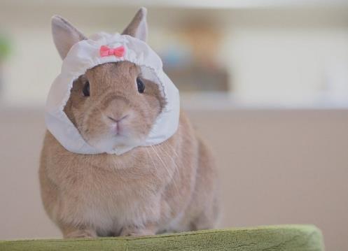 胖次其实是小清新 头戴内内的兔子真可爱
