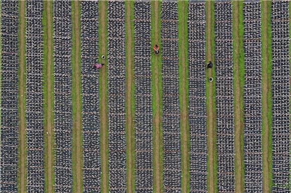 """彭水:农业生产有序推进 畅通农资运输""""绿色通道"""""""