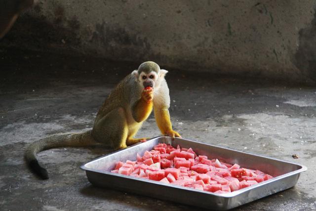 参禅机打一生肖_吃西瓜 打一动物 一个人吃了一大口西瓜,然后站在门外吐。为 ...