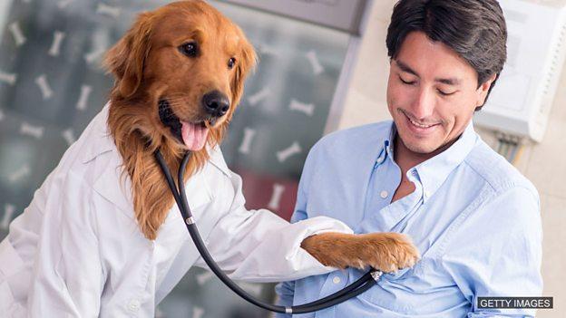 养宠物的坏处英语_The dogs who safeguard our hearts 养狗能保护我们的心脏健康_教育_腾讯网