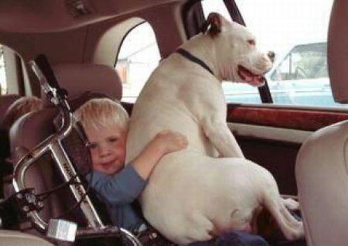 人与动物兽交_人与动物和睦相处(组图)