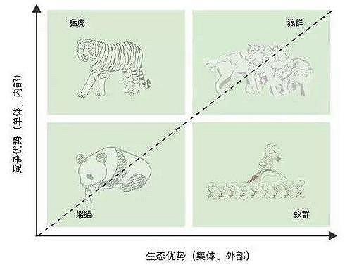 熊猫、猛虎、蚁群、狼群,看看你的企业是哪类?