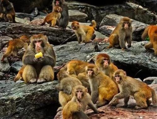 神龙架猕猴乐园正式门口迎客