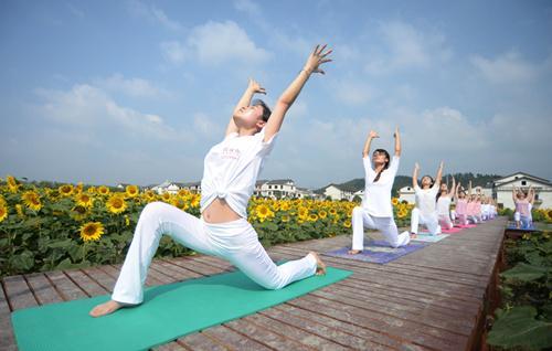 郴州市北湖區葵花盛開如花海 美女慕名而來秀瑜伽圖片