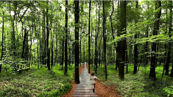 大苏菌邀你一起免费植树 把春天种进每一个明天
