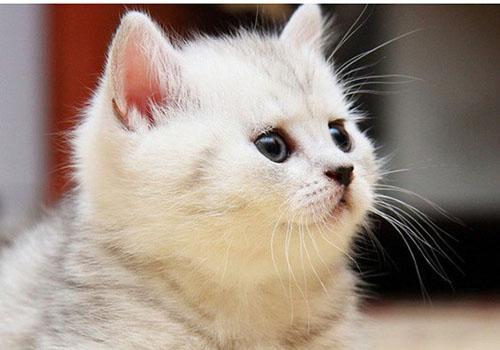 qq懒猫_外公家的大懒猫_腾讯儿童_腾讯网