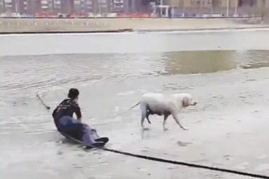 狗落冰湖几次营救失败 路人小伙悬绳搭救