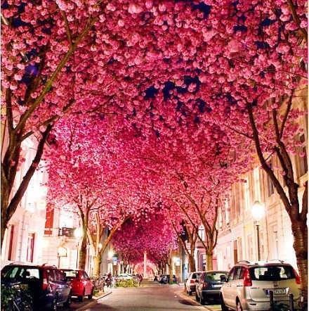 """全球六大赏樱目的地 一年一度的""""花见""""之旅"""