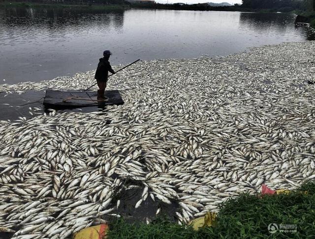 qq农场鱼塘_广东惠州92亩鱼塘一夜死20万斤鱼(图)_新闻_腾讯网